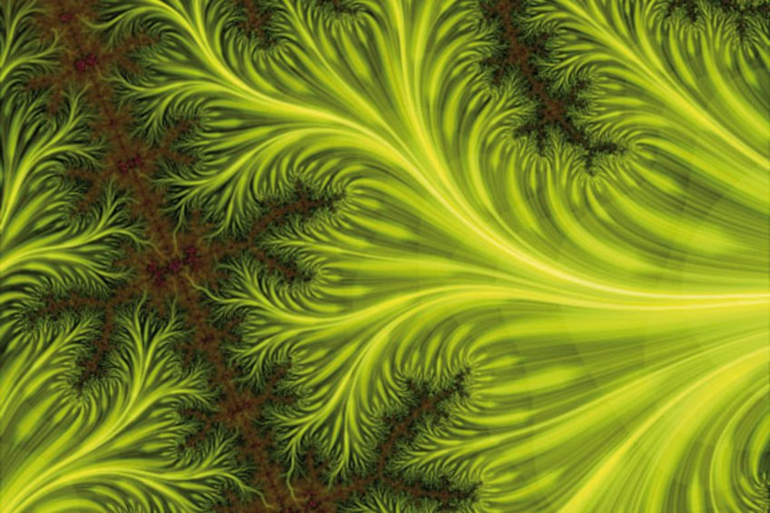 fractal alimentacion.jpg